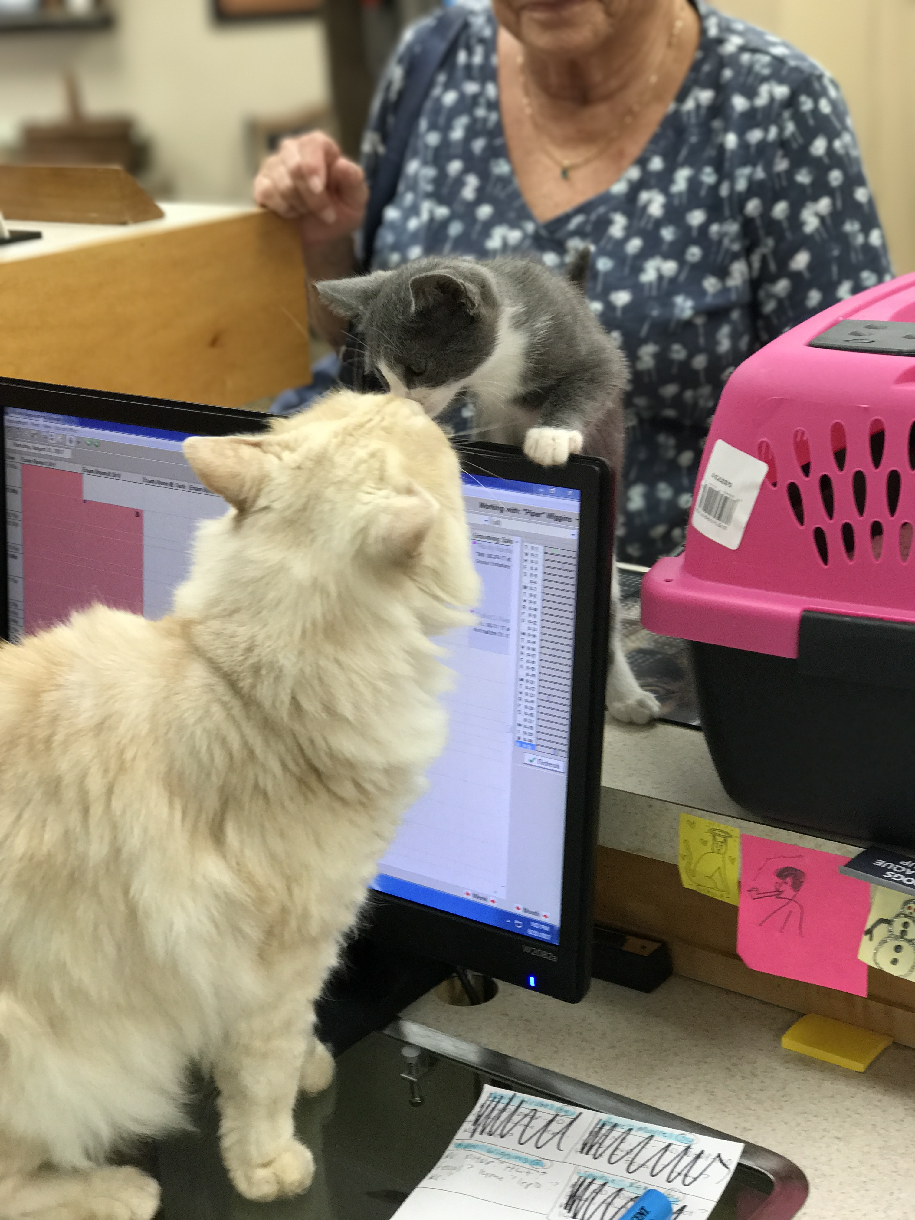 Office cat greeting a kitten